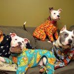 Pajama Day The FLEX Way